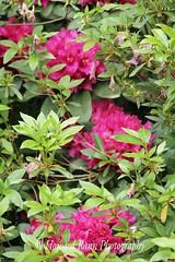 Fellows Riverside Gardens (72) (Framemaker 2014) Tags: fellows riverside gardens mill creek park youngstown ohio northeast united states america