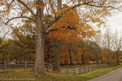 Ira Road (Singing Like Cicadas) Tags: 2019 autumn ohio outdoors nature color october trees leaves halefarmandvillage cvnp cuyahogavalleynationalpark onethousandgifts