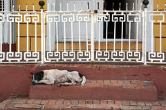 Deep Rest (emerge13) Tags: plazamayortrinidadcuba trinidadsanctispirituscuba trinidadcuba cuba streets dogs animals architecturedetails architectureheritage colonialarchitecture colonialcities