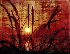 at the bay (Sonja Parfitt) Tags: texture reeds sunset