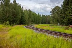 Westlock Rail (Bracus Triticum) Tags: westlock rail アルバータ州 alberta canada カナダ 8月 八月 葉月 hachigatsu hazuki leafmonth 2019 reiwa summer august