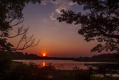 Tranquil (Bhuvan N) Tags: mysore mysuru travel kukkarahallilake lake nature naturephotography natur natura naturaleza india karnataka evening orange sun sunlight light outside trees sky blue cielo ciel colours colors