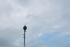 going home (kasa51) Tags: bird gul streetlamp yokohama japan カモメ sky cloud