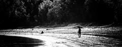 Baie du Moulin à Baude (MichelGuérin) Tags: 2019 baiedumoulinàbaude blancwhite canada dxosilverefex lesdunestadoussac lightroomcc michelguerin michelguérin nikkorz2470mmf28s nature nikcollectionpardxo nikkorz nikon nikonz6 noirblanc novembre paysage qc québec tadoussac automne2019