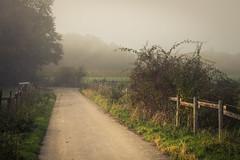 Another Day, another Mood (Netsrak) Tags: baum bäume eu eifel europa europe forst landschaft natur nebel fog landscape mist nature
