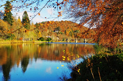 Autumn on the river Tay (eric robb niven) Tags: ericrobbniven scotland dunkeld perthshire rivertay landscape springwatch