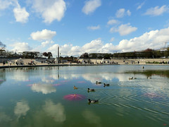 Nymphéas Post déluge II (Raymonde Contensous) Tags: paris jardindestuileries fiac2019 artcontemporain exposition eau nature bassin ciel paysage nuages reflets