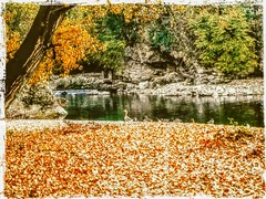 A passeggio sulle rive del fiume (color raimbow) Tags: river autumn riverside goldenleaves carpet water green trees fascinating beautifulnature ducks goose