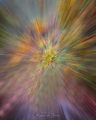 Color Explosion! (karindebruin) Tags: geel icm trees bomen forest colors explosion bos beweging