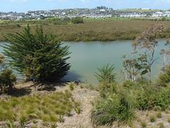 20191115-114235 (LSJHerbert) Tags: auckland geo:lat=3659496700 geo:lon=17467483500 geotagged newzealand nzl 20191115wtk millwater orewa viewranger access crossing housingdevelopment mangrove publicreserve river tide tree