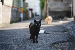 猫 (fumi*23) Tags: ilce7rm3 sony sel35f18f emount 35mm fe35mmf18 a7r3 animal alley cat chat gato neko bokeh dof ねこ 猫 ソニー
