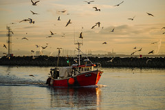 When the boat comes in (tonguedevil) Tags: outdoor outside seaside seascape autumn sea water reflections ripples waves boat trawler red seagulls birds port harbour colour light shadows sunlight sunset