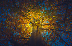 Autumn Collection - 11 - dreamy (Dhina A) Tags: sony a7rii ilce7rm2 a7r2 a7r fe 24105mm f4 sonyfe24105mmf4 zoom lens bokeh sharp sel24105g autumn collection dreamy trees colorful colours