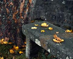 秋深し (Nobusuma) Tags: nikon nikond610 digital nikkor50mmf18g autumn fall leaves bench tree ニコン 秋 気 ベンチ 葉