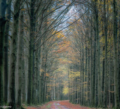 09112019-DSC_0030 (vidjanma) Tags: chemin arbres automne allée