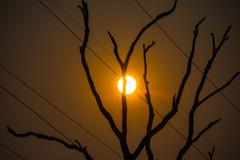 Road Trippin Smoke Haze Sunset (Merrillie) Tags: lines smokehaze sunset vibrant australia orange powerlines haze sun silhouette tree dark travelling newsouthwales nsw light shapes stark