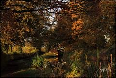 November Photo School Walk. (Picture post.) Tags: landscape nature green autumn canal bridge trees oak water reflections reeds paysage arbre eau