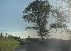 The Darley road (Elisafox22) Tags: elisafox22 apple iphone xsmax ff fencefriday winter sunshine fencedfriday fence fenceposts field grasses road roadside tree trees outdoors morning aberdeenshire scotland elisaliddell©2019