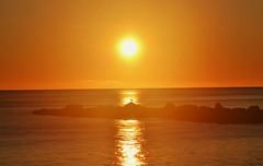 Sunrise - Amanecer (En memoria de Zarpazos, mi valiente y mimoso tigre) Tags: sunrise sun skyfire skyred seascape skyscape silhouette seagull breakwater amanecer sol cielorojo cielorojizo silueta gaviota espigón beach playa alicante nikon