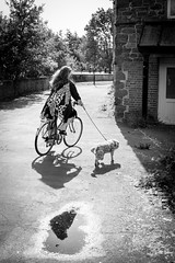 puddle... (Vladimir Barvinek) Tags: town reflection shadow street dog ride bicycle bike puddle