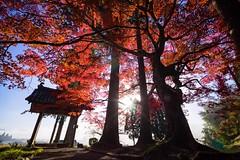 Colored-leaves (walkkyoto) Tags: 南丹市 龍穏寺 ryuonji 寺 temple 紅葉 京都 kyoto 日本 japan laowa75mmf2