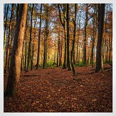 Pollok Park (ianmiddleton1) Tags: trees woodland glasgow autumn autumnal fall