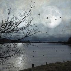 Evening in Stockholm (Kerstin Frank art) Tags: moon treeswater birds kerstinfrankart texture stockholm sweden evening night