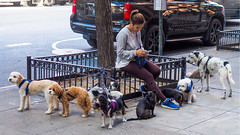 Break Time (Eclectic Jack) Tags: woman phone cell dog canine time break rest fence tree photography street september 2019 trip nyc city york new newyorkcity upper east side uppereastside