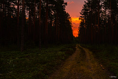 Go down the road... (thore.bryhn) Tags: sunset road forest