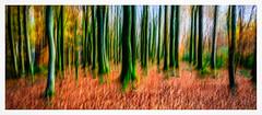 IMG_3316-Edit-Edit (ianmiddleton1) Tags: icm panorama movement woodland trees autumn autumnal fall colours colors