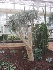 Plant information (Zona  Desértica 2) (d.kevan) Tags: