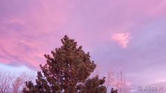 November 15, 2019 - Pastel clouds at sunrise. (Alisa H)