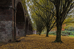 The viaduct... (PhredKH) Tags: 2470mm architecture arnospark canoneos5dmkiii canonphotography ef2470mmf4lisusm fredkh greenlondon greenspaces london northlondon park parland photosbyphredkh phredkh splendid trees urbanpark arches autumn fallingleaves goldenleaves viaduct
