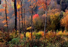Variety of fall colors (majka44) Tags: les forest colors light nature autumn slovakia landscape variety nice walk atmosphere
