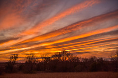 Kansas, U.S.A., Killer Sunset, One of Several (thefisch1) Tags: sunset sunrise colorful lines linear horizon sky pasture tree pink