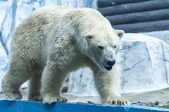 Khabarovsk Zoo (一 B_A_C 一) Tags: khabarovsk russia 伯力 哈巴羅夫斯克 俄羅斯 europe 歐洲 sony a73 a7iii a7m3 a7 taiwan 台灣 外拍 旅拍 travel 街拍 street streetphoto streetshot zoo 動物園
