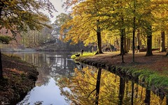 Autumn walk (Wouter van Wijngaarden) Tags: woutervanwijngaarden baarn thenetherlands groeneveld herfst autumn water lake meertje wout tree trees dog honden provincieutrecht sun november 2019 manual focus lens prime canon fd 50mm f14 sony nex ilce7m2 wood wijnberg engels landschap stijl frans landscape zwemmen natuur nature kleuren spiegelingen reflectie reflection holland dutch nederland landschapspark engelslandschapspark engelslandschapsparkgroeneveld wonderful landscapes wonderfulwaterlandscapes sonyflickraward woutvanwijngaarden