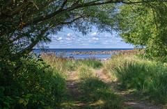 out from the bush (Seerin Kama) Tags: summer trip bush sea sky tree trail path pentax k5 coast shore
