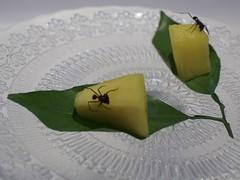 Pinya amb formiga amazònica, Av, del Paral.lel 164, Barcelona. (heraldeixample) Tags: heraldeixample bcn barcelona spain espanya españa spanien catalunya catalonia cataluña catalogne catalogna pineapple pinya ananas formiga hormiga ant amazonia ngc albertdelahoz piña