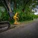 06/21/19 Deforestation machinery
