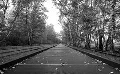 Vanishing Point - Fluchtpunkt (lars.mertner@t-online.de) Tags: perspektive railway blackandwhite bw schwarzweis germany deutschland eisenbahn südbahngelände berlin nikonz6