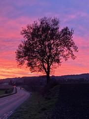 wonderful colourful sunset in Switzerland / Abendrot (roli_b) Tags: wonderful sunset sun set colourful colour red night evening abendrot switzerland schweiz suisse suiza sivzzera sonnenuntergang abend dämmerung road tree baum nature landscape