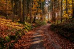 2019 Bike 180: Day 186, November 15 (suzanne~) Tags: 2019bike180 bike bicycle bavaria germany path autumn trail woods forest
