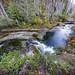 North Fork Silver Creek Wild & Scenic River