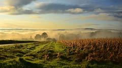 palette d'automne (eric-foto) Tags: bretagne sunrise leverdesoleil brouillard plonevezdufou breizh brittany bzh campagne nikond800 pennarbed centrebretagne champs fields