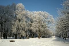 IMGP1822@L6 (Logan-26) Tags: city park winter riga aleksandrs čubikins snow blue sky white trees latvia sigma af 1020 mm pentax k3 lens landscape sun