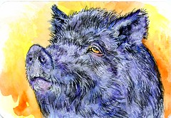 Sow What-Postcards for the Lunch Bag (Life Imitates Doodles) Tags: postcardsforthelunchbag watercolor pig sow animal