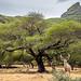 Casela Nature Park - Mauritius - Travel photography