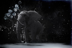 How do elephants dream ? (milena carbone) Tags: 3d africa art blackandwhite black bw dark elephant dream fog garden balloon illustration light monochrome night secondlife secondlifeart secondlifephotography slart slphoto slphotography star stars sky shadow tree trees virtual world