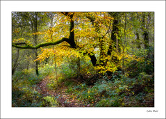 Autumn path - 2019-11-03rd (colin.mair) Tags: autumn dundonald forest border frame leaves trees yellow